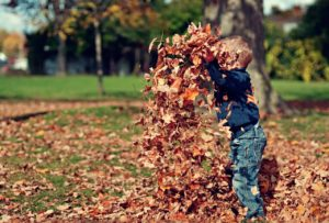 Young boy playing with and throwing leaves.