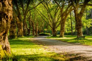 A tree-lined pathway.
